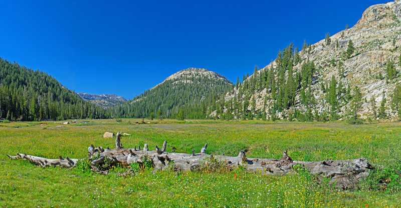 Looking down Horse Meadow toward Sachse Monument. Remarkable green and covered with flowers.