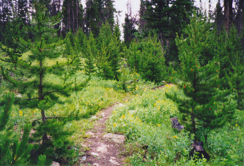 North Lone Pine Trail.