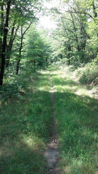 Grassy singletrack