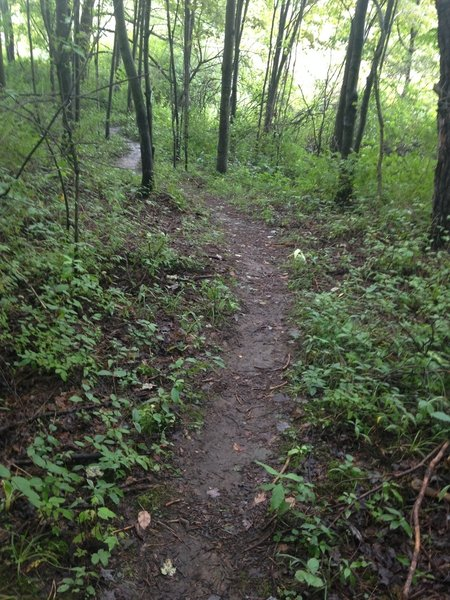 Yellow Creek - Paul Trail - this section is a beginner friendly trail.