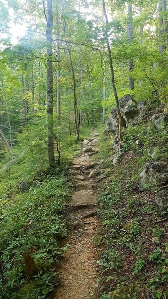 Typical trail condition, with roots and rocks.