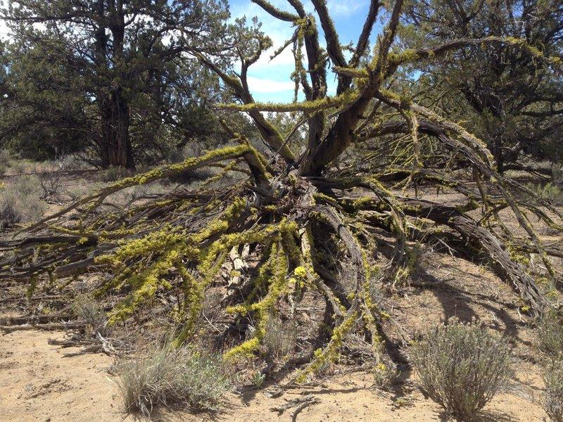 Nature's trailside art
