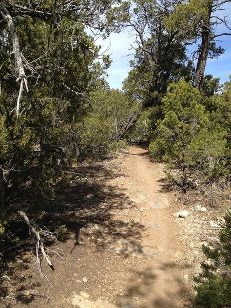 The Cedro Singletrack Trail