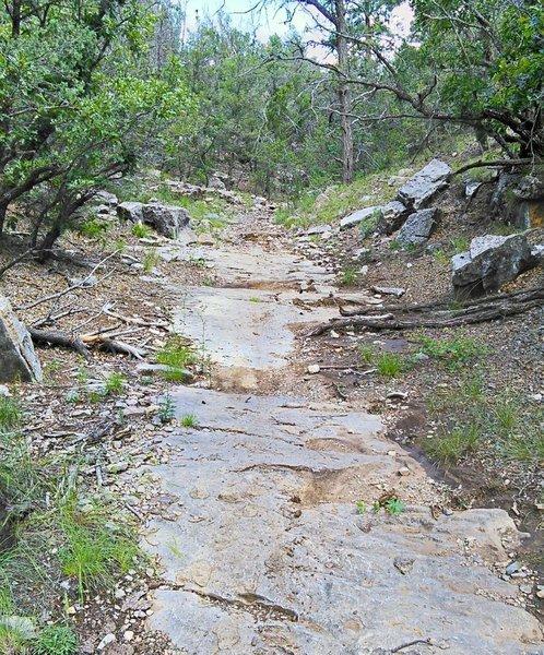 Bedrock pavement in the arroyo.