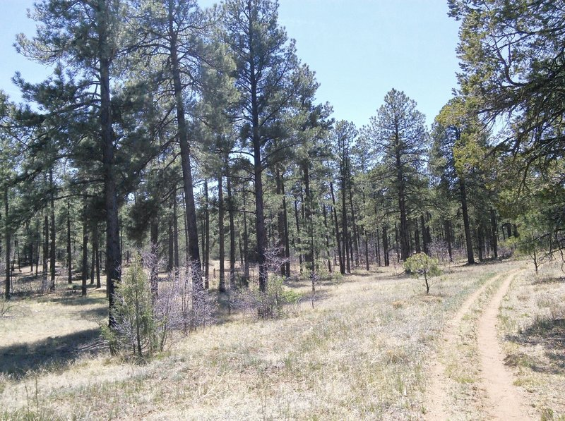 North side is open meadow lands with Ponderosa pines.