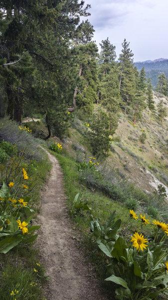 Spring flowers on Rosie Boa Trail.