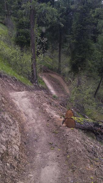 On the Rosie Boa Trail