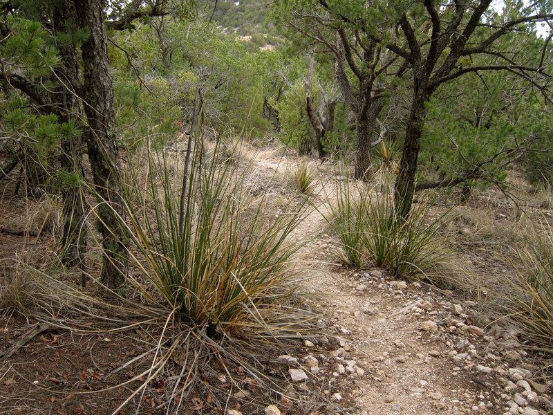 Mount Kimball Trail.