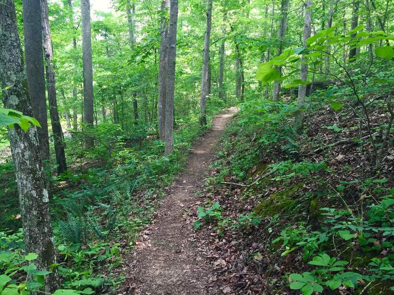 Typical scenery along the lower limb of East Armuchee trail.