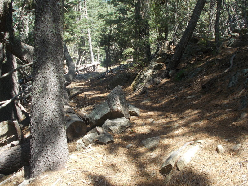 Enjoy the pines, avoid the rocks
