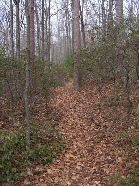 Rim Trail.
