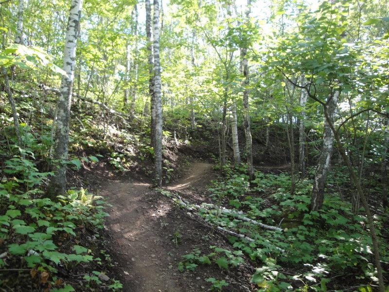 Amity East Trail