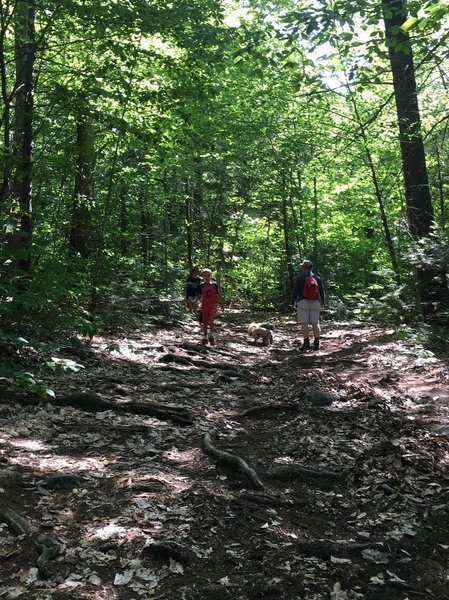 It's fun and easy for kids to scramble around on the High Watch Trail.