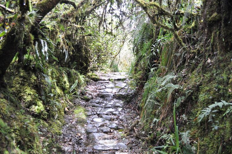 Camino entre los musgos