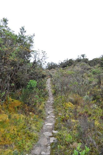 Road entering the moor