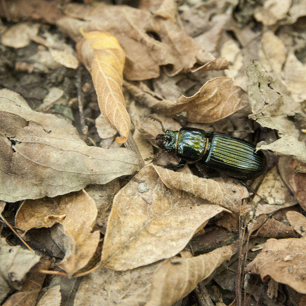 Beetle in the Woods