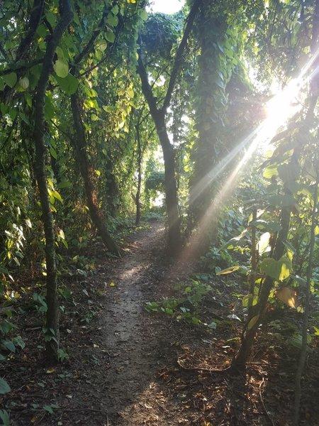 Trail winding through local flora