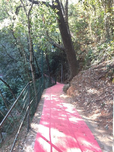 This portion of the trail is literally a red carpet!