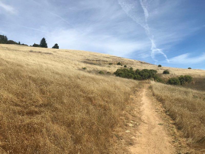 The trail cuts through the fields in Skyline Ridge OSP.