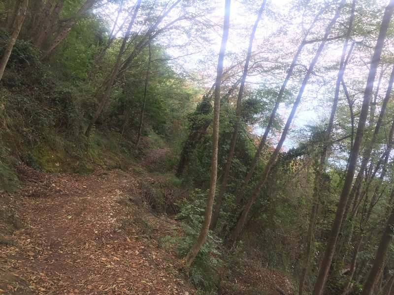 Typical section of trail, switchbacks under nice tree shade.