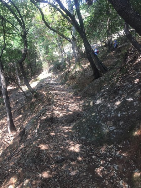 Looking back up the trail. Thankfully for those ascending from San Fruttuoso, the trail is well shaded!