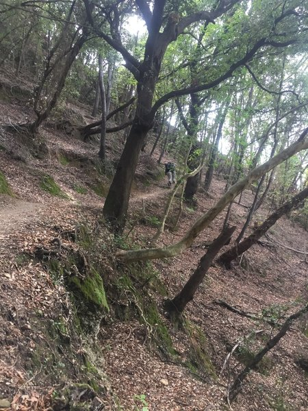Ascending the switchbacks in the cover of shade trees