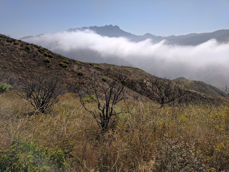 Boney Mountain beyond the morning clouds snaking up Sycamore Canyon.