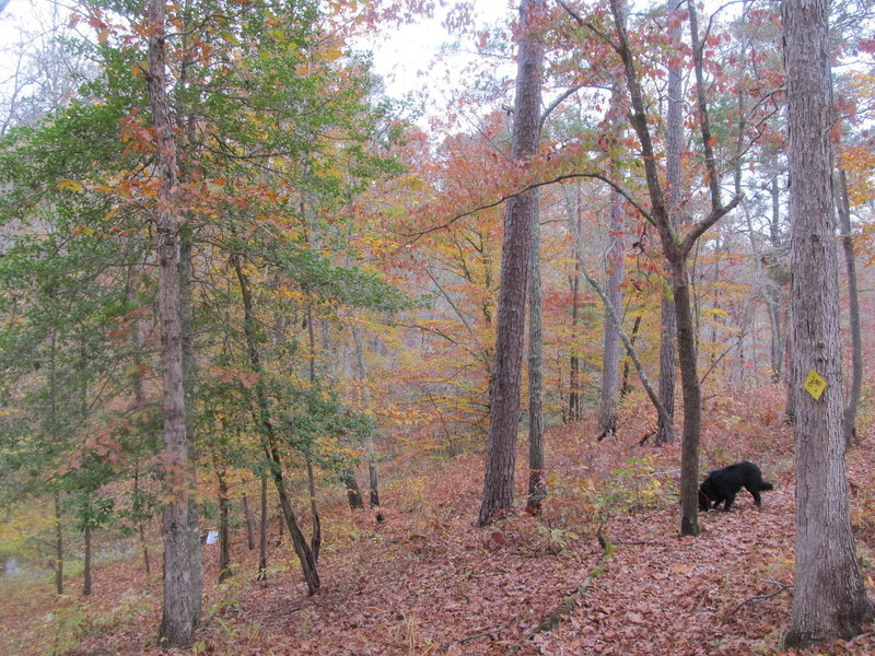 Fall colors along the Noxubee River and Beaver Lodge Trail.