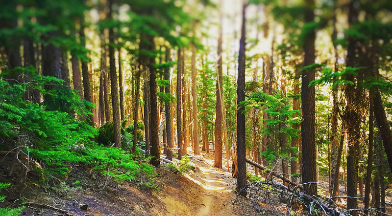 The South Fork trail is one of many seemingly endless trails in Oregon.