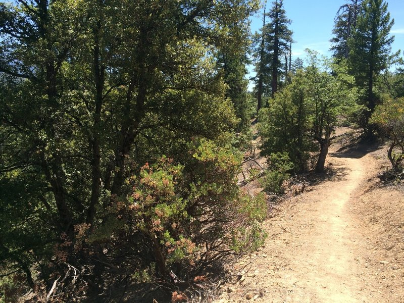 Ponderosa pine, manzanita, and oak is the main type of vegetation cover. Pretty thin, so it doesn't provide a lot of shade in the middle of the summer!