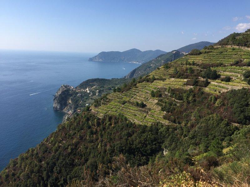 Beautiful views of terraced vineyards, Corniglia, and the sea!