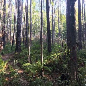 Castor Creek Scenic Area