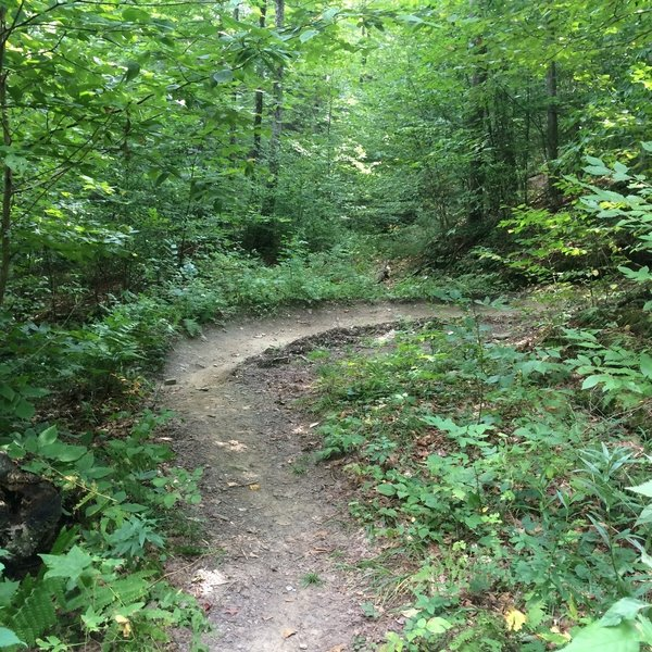 Another switchback on Fusters Trail!