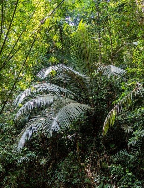 Rainforest foliage