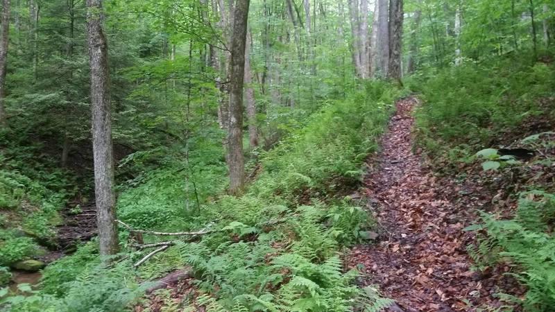 Seneca Creek side of Swallow Rock Trail.