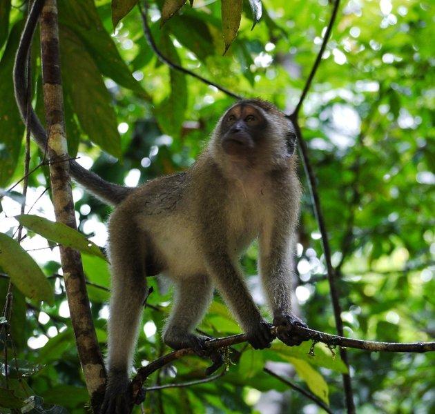 Khao Sok monkey.