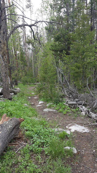Section of trail that criss crosses road.