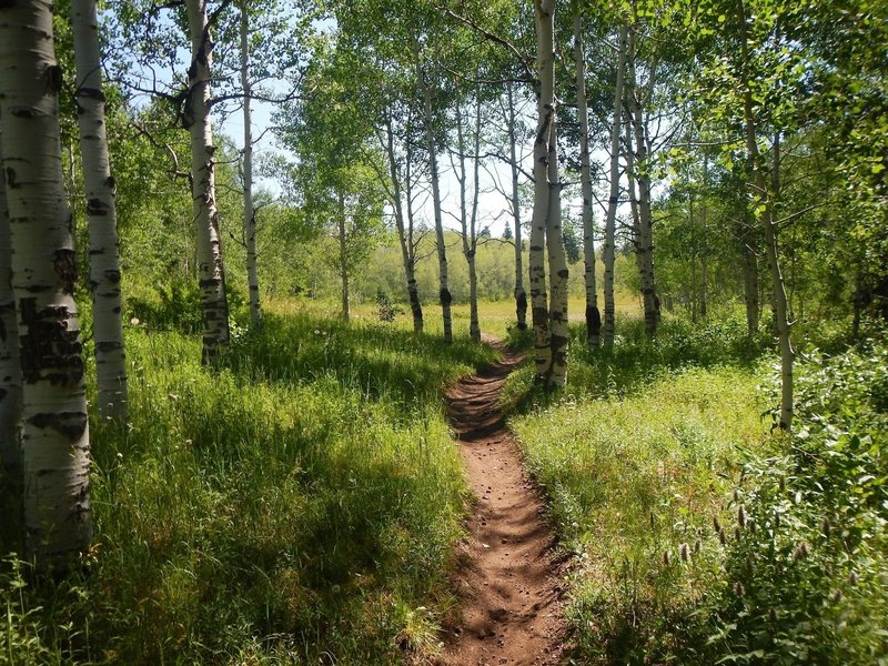 The meadow and aspens near the top of the trail.