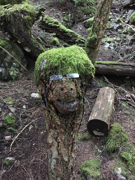 Funny stump decorated with moss (and glasses!) on Mount Killam Trail.