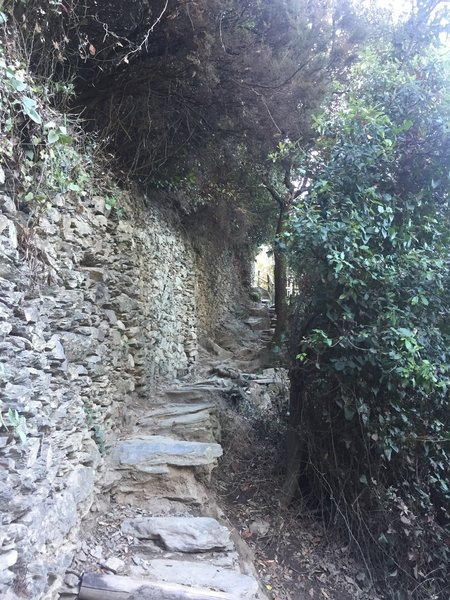 The trail is sometimes narrow and passing can be a challenge if crowded.