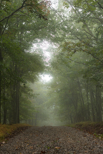 A misty morning on the rolling dirt/gravel road on the Brush Mountain ridgeline section of the Horse Nettle Trail.