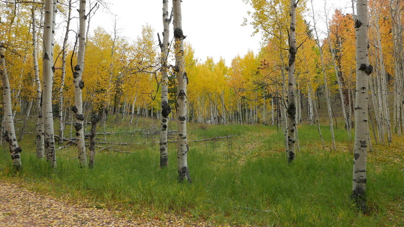 Plenty of fall colors on this trail.