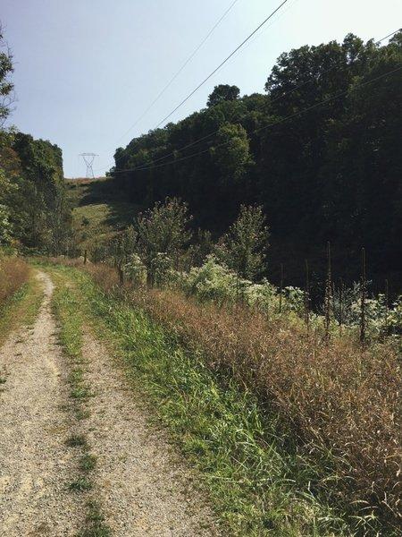 Open section on Walter Taitt Trail.