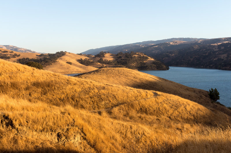 Grassy northern shore of Lake Del Valle during sunset