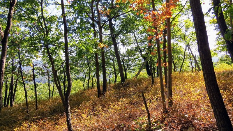Dark Hollow Trail in Schunnemunk State Park, NY, hints at what's soon to come this autumn
