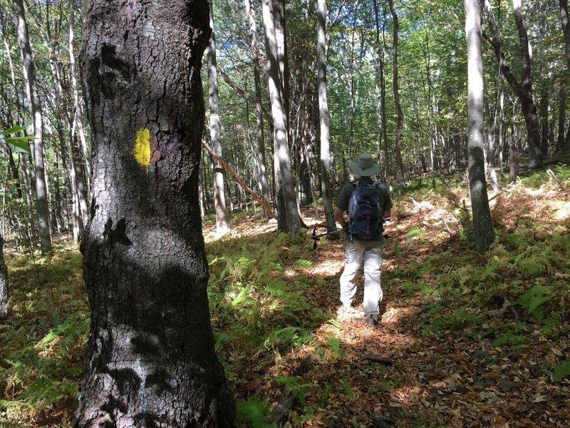 Rocky Branch Trail yellow blazes