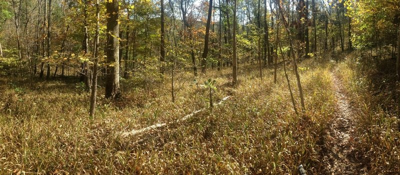A beautiful clearing on the Adventure Hiking Trail, before the last descent to Cold Friday Road.