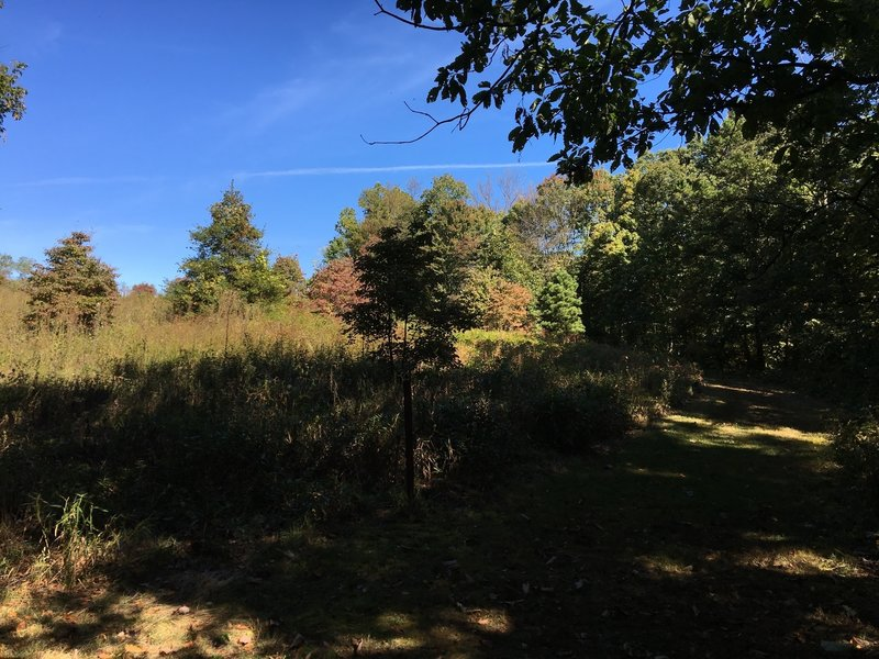 Grassy trail along a meadow.