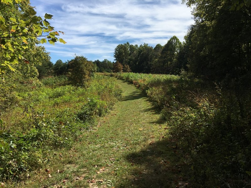 Grassy trail through a meadow.