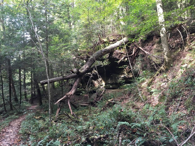 Trail on the left with outcrop and fallen tree